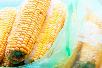 4 Things to Understanding How To Freeze Corn on the Cob | ultimatefoodpreservation.com