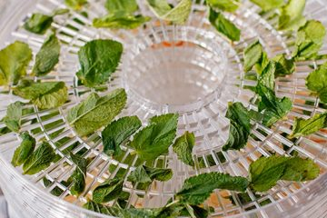 6 Easy Steps to Drying Herbs in a Dehydrator You Need to Know | ultimatefoodpreservation.com